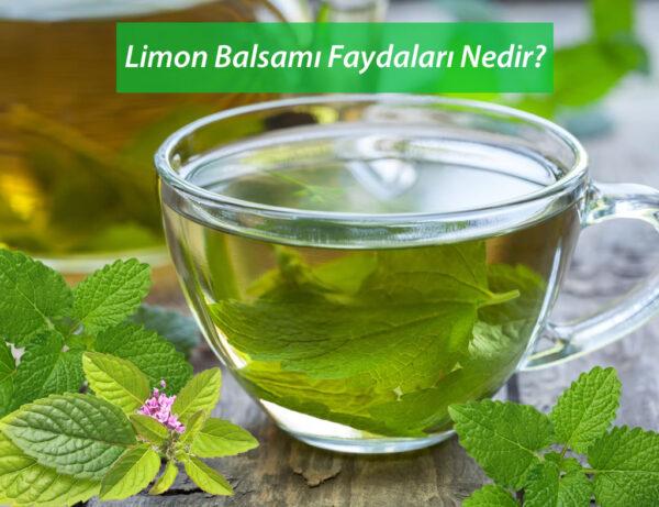 Limon Balsamı Çayı Faydaları Nedir ?