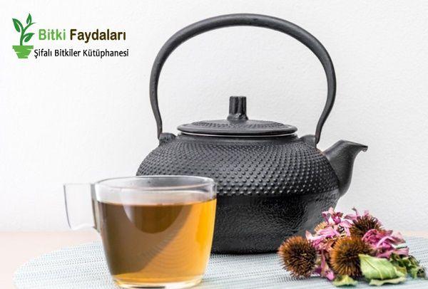 ekinezya çayı nasıl demlenir
